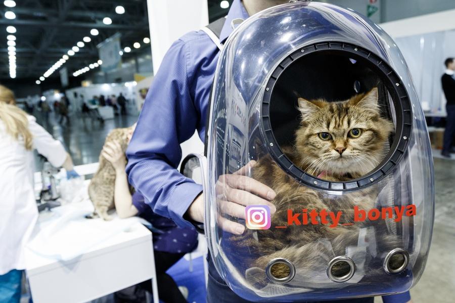 Роскошь клуб кошек в москве ночные клуб пекин