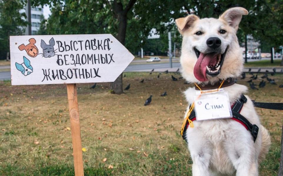 Выставка бездомных животных «Summer! Хвостофест» — Вход свободный